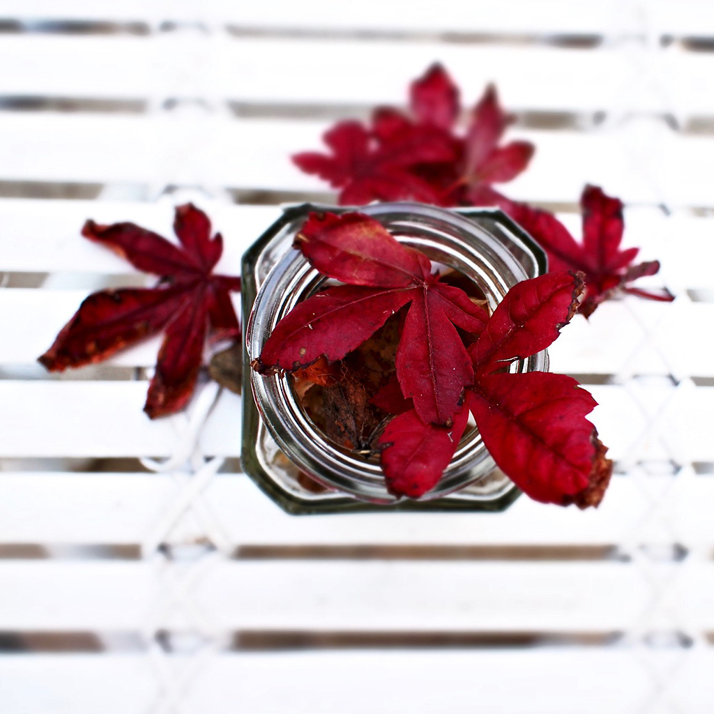 Red autumn leaves in mason jar on white table seen from above