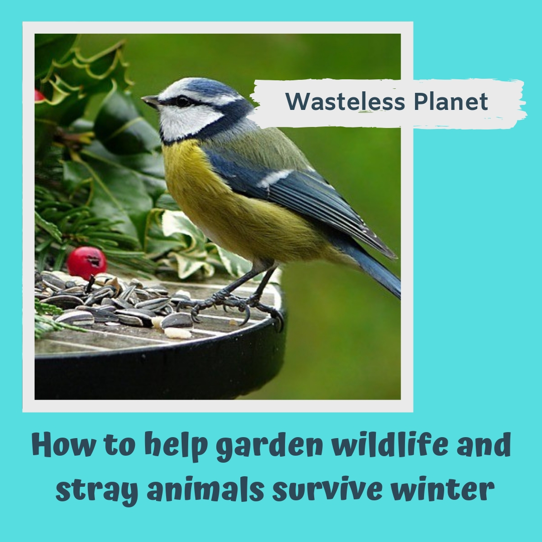 Help garden wildlife and strays survive winter | Wasteless