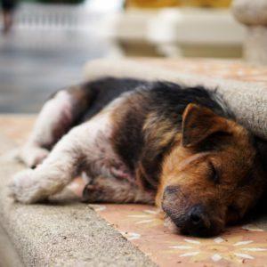 Stray dog sleeping on bench