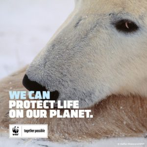 Polar bear | We can protect life on our plaanet WWF