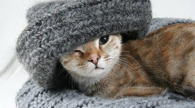 Kitten wrapped in grey sweater
