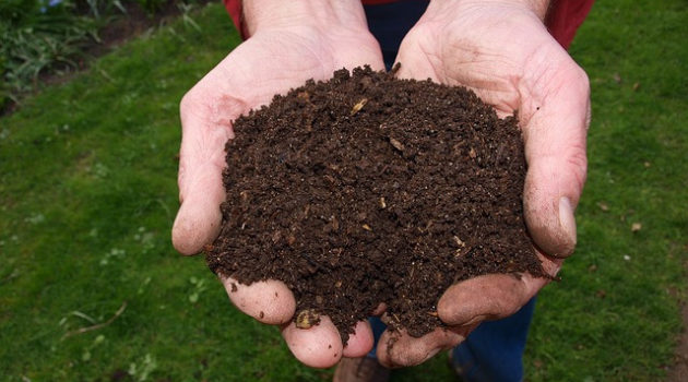 Hands holding dry compost dirt